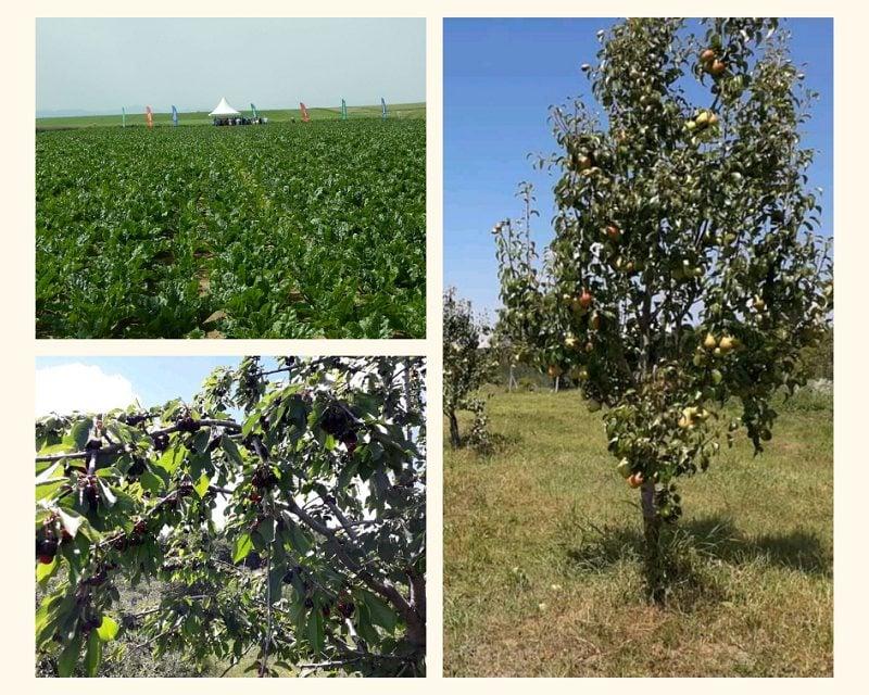 Curs Lucrător în Agricultură și Gospodărie ecologică