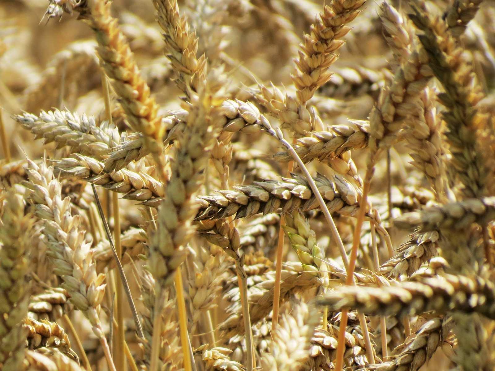 Curs Managementul exploatatiilor agricole – Curs Viitor